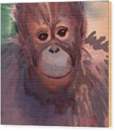 Young Orangutan Wood Print
