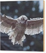 Young Owl Wood Print