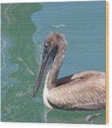 Young Pelican Wood Print