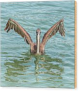 Young Pelican 0087 Wood Print