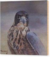 Young Peregrine Falcon Wood Print