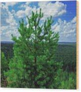 Young Pine Wood Print