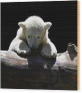 Young Polar Bear On A Log Wood Print