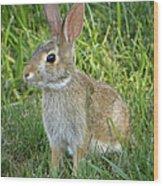 Young Rabbit Wood Print