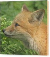 Young Red Fox In Profile Wood Print