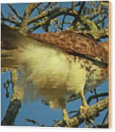 Young Red-tail Wood Print