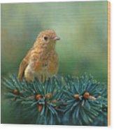 Young Robin On Pine Tree Wood Print