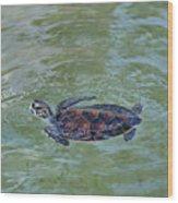 Young Sea Turtle Wood Print