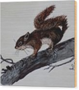 Young Squirrel Wood Print