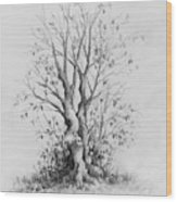 Young Tree Wood Print by Rachel Christine Nowicki