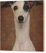 Young Whippet Wood Print