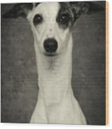 Young Whippet In Black And White Wood Print