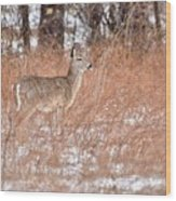 Young White-tailed Deer In The Snow Wood Print