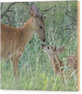 Young White-tailed Deer Say Hello Wood Print