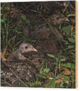 Young Wild Turkeys Wood Print