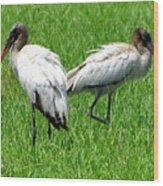 Young Wood Storks 2 Wood Print