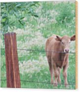 Youngster Wood Print