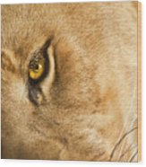 Your Lion Eye Wood Print by Carolyn Marshall