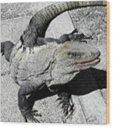 Yucatan Lizard Wood Print