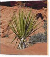 Yucca Beauty Wood Print