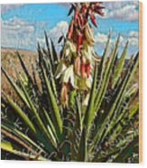 Yucca Bloom Wood Print