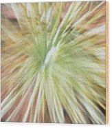 Yucca Burst Wood Print