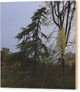 Yucca Filamentosa Rainy Day In Malibu Wood Print