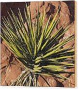 Yucca Five Wood Print