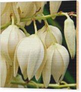 Yucca Flower Wood Print