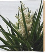 Yucca Flowers Wood Print