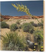 Yucca In The Valley Of Fire Wood Print