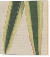 Yucca Leaf Wood Print