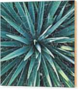 Yucca Plant Detail Wood Print
