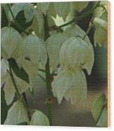Yucca Plant Wood Print