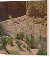 Yucca Plants Valley Of Fire Wood Print
