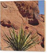 Yucca Three Wood Print