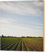 Yuma Fields  Wood Print