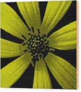 Yummy Yellow Wood Print