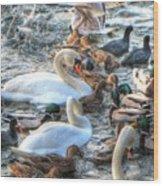 Yury Bashkin Ducks Stockholm  Wood Print