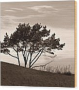 Yyteri Evening Wood Print