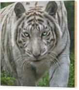 Zabu Wood Print by Big Cat Rescue