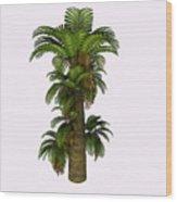 Zamites Tree Wood Print