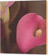 Zantedeschia Pink Puppy  Wood Print
