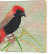 Zanzibar Red Bishop Wood Print
