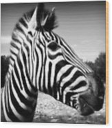 Zebra 2 Wood Print