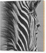 Zebra Baby Wood Print