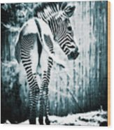 Zebra Blues  Wood Print