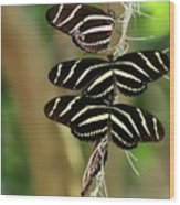 Zebra Butterflies Hanging On Wood Print