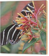 Zebra Butterfly With Blue Eyes Wood Print