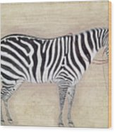 Zebra, C1620 Wood Print
